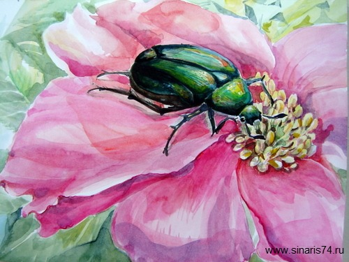 drawing, watercolor, Calosoma sycophanta, red flower, green beetle