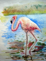 drawing, watercolor, Flamingo, pink, water, long legs