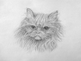 drawing, watercolor, Cat, cat, mane, muzzle, snout, eyes, ears, nose