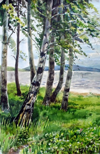 drawing, watercolor, Birches, greens, birch, beach, mountains