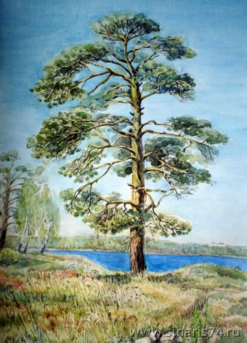 drawing, watercolor, Cape Skopin. Sinara lake., pine, beach, lake, rocks