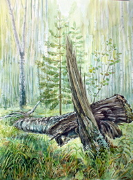 drawing, watercolor, Tree Stump, birch, tree stump, wood