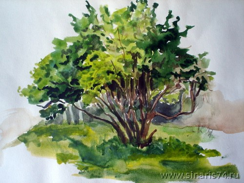 drawing, watercolor, Sketch green bush, bush, herbs