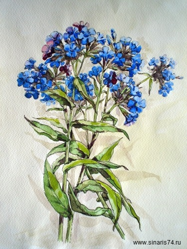 drawing, watercolor, Bees, bouquet of blue flowers