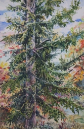 drawing, watercolor, Spruce, tree in the forest