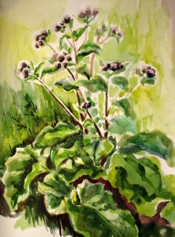 drawing, watercolor, Burdocks, bush green