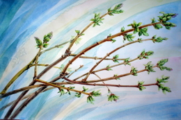 drawing, watercolor, The buds, The buds on the branches
