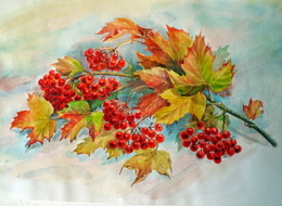 drawing, watercolor, Viburnum, branches, leaves