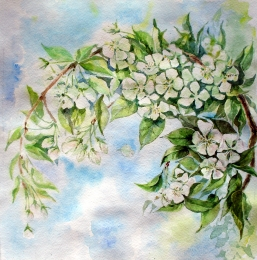 drawing, watercolor, Apple tree branch, blooming apple tree